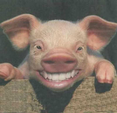 List Of Synonyms And Antonyms Of The Word Pig Teeth