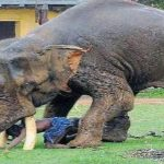 EVEN the elephants don't want Rohingya Muslims on their land in Bangladesh and are trampling them to death