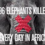 Are elephants evolving to save their species from extinction because of poachers, many of whom are Muslims, who kill elephants for their ivory to fund terror operations?
